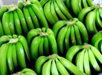 Giải pháp kéo dài thời gian bảo quản cho chuối xuất khẩu