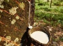 Ứng dụng của chất khử bọt lưu hóa cao su trong sản xuất cao su