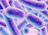 Các loại phụ gia kháng khuẩn sử dụng trong sản xuất sơn